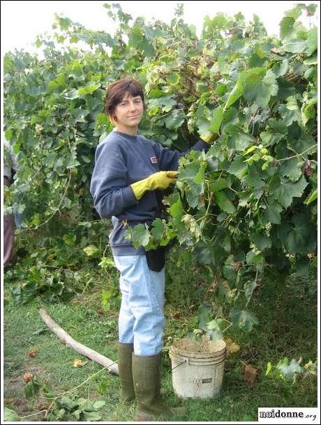 Udine: l'azienda agricola è rosa